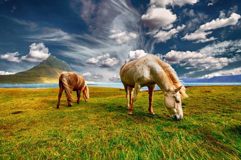 馬耳東風の意味とは?馬の耳に念仏との違いは?類義語/由来も!
